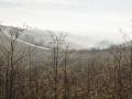 Misty Winter's day on Salisbury Plain